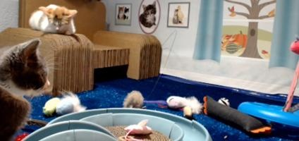 """The """"Too Cute Kitten Cam"""" Features a Dollhouse for Kittens   Catster  Love that chair !!!"""
