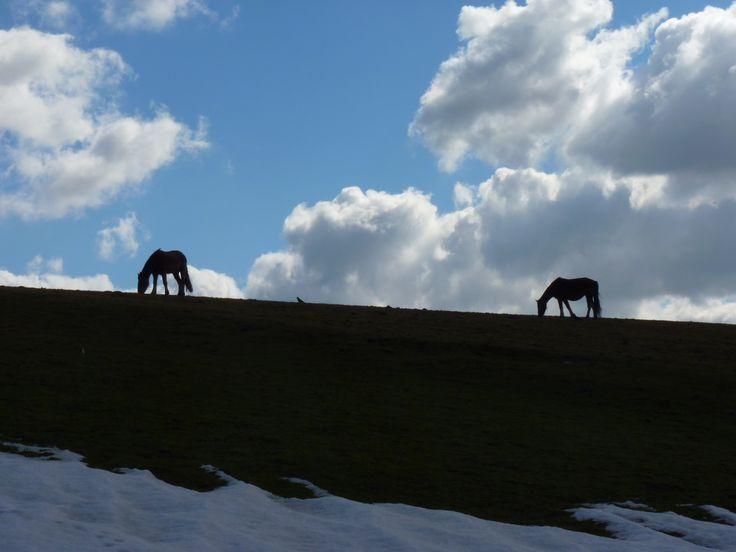 Horses near Halifax