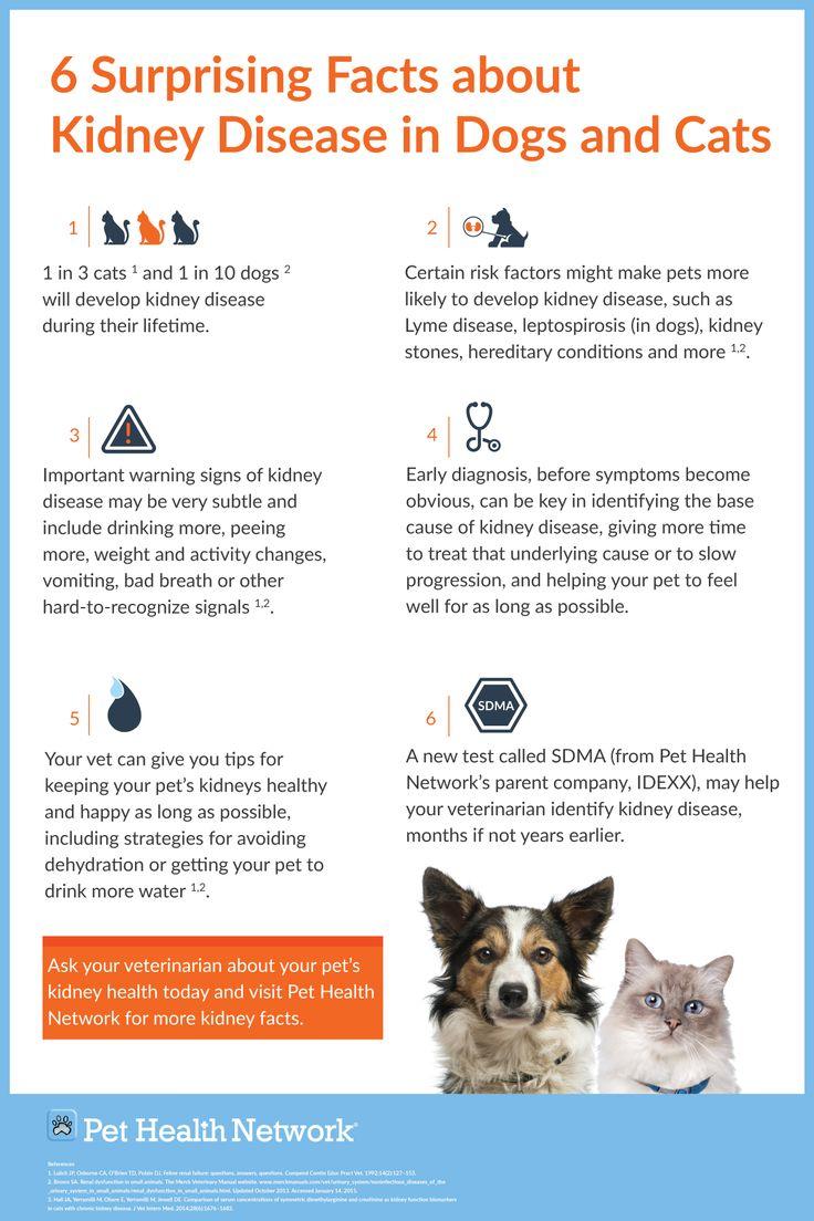 1000 Ideas About Chronic Kidney Disease On Pinterest
