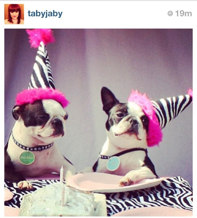 17 Best Images About Boston Terrier Themed Baby Shower On