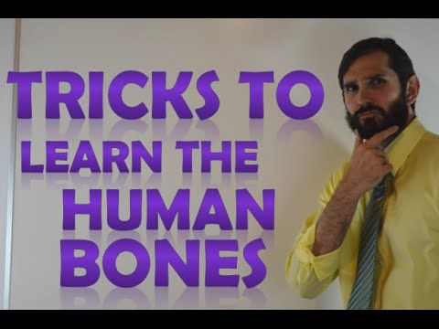 How to Learn the Human Bones | Tips to Memorize the Skeletal Bones