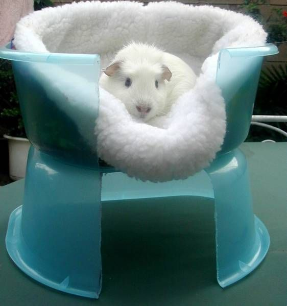 17 Best Images About Pet Friendly Flooring On Pinterest: 17 Best Images About Guinea Pig Cages On Pinterest
