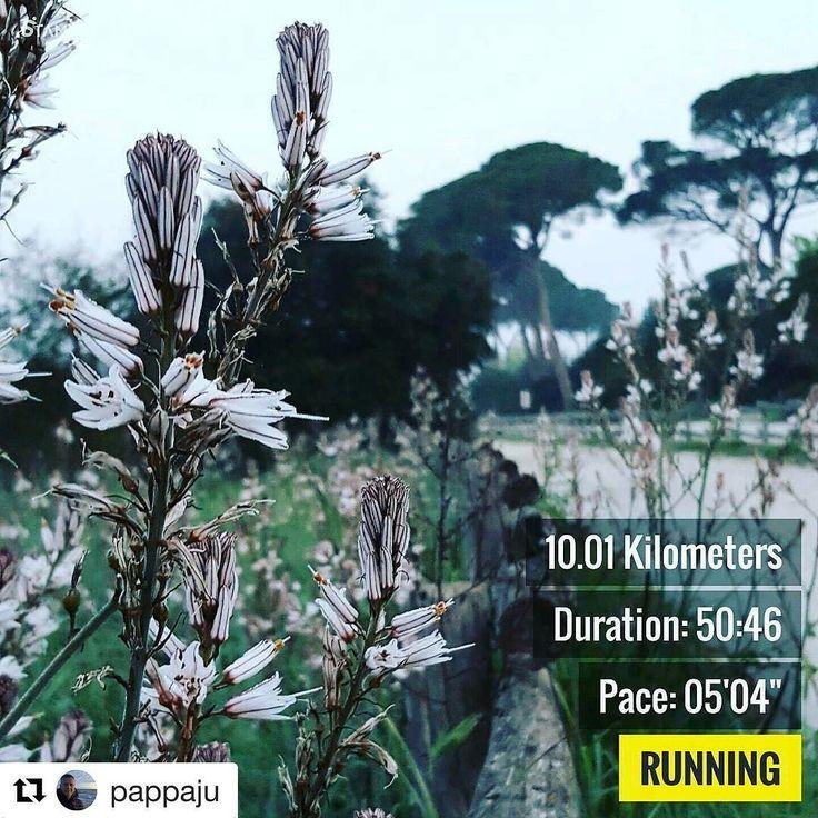 #Repost @pappaju with @repostapp  #run #runhappy #running #marathon #runtheworld #training #Rome #italy #workout #runningman #runhard #correre #maratona #runningchef #runfast #pic #photo #photography #newportri #roadtonewport #road @racetherhode