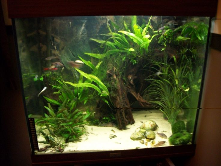 29 best akvarium images on pinterest | aquarium ideas, planted ... - Decorazioni Juwel