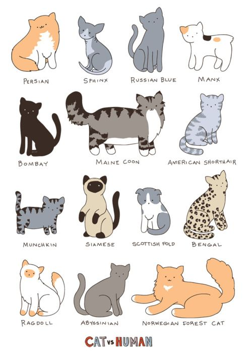 Types of Cats - See more stunning cats at Catincare.com!