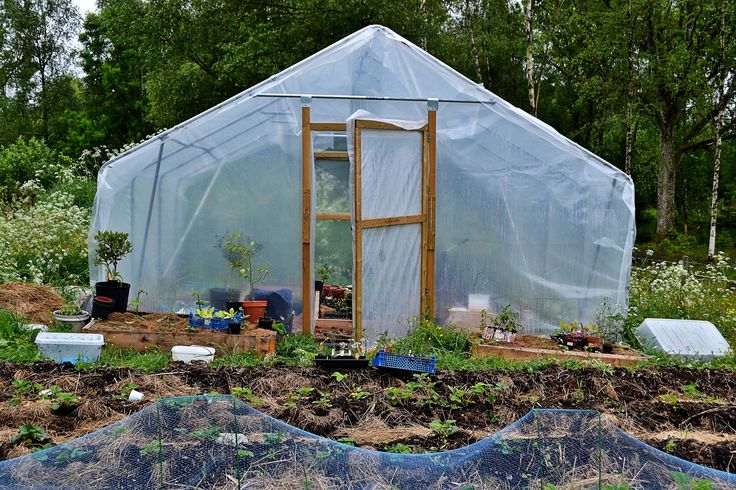 Preparing for wintervegetables in the polytunnel.