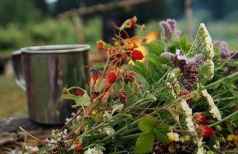 «Чай» для рыбалки  Строго говоря, чаем можно называть лишь листья, собранные с чайного куста, растущего на плантациях где-нибудь в Индии, Китае или, в крайнем случае, на Кубани. Напиток, который готовится из других растений, лучше бы называть не «чаем», а как-то по-другому, например, «отваром» или «взваром».    Показать полностью.. Называя лесной напиток «чаем», мы как бы невольно сравниваем его с привычным вкусом настоящего чая, а этого делать как раз и не нужно! Лесной «чай» не может быть…