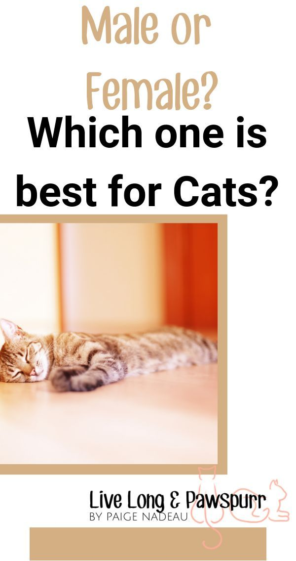 The Remarkable Truth About Cat Genders Which Is Best For You
