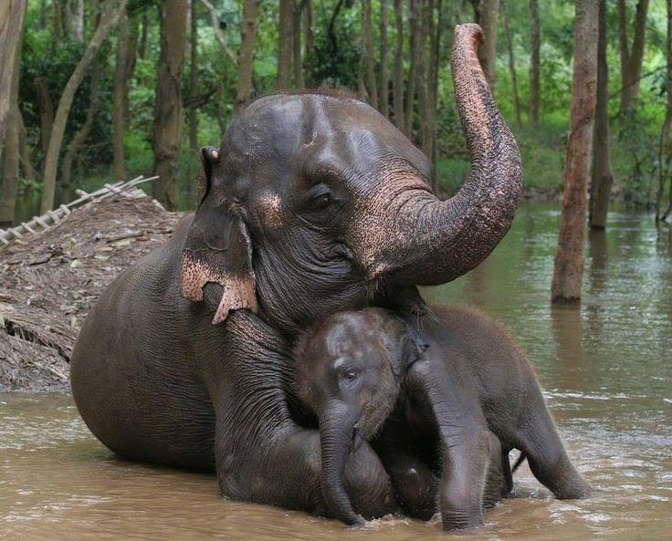 Elephant and baby elephant - Sri Lanka - http://www.travelmoodz.com/en/travel-professional/raja-ranasinghe