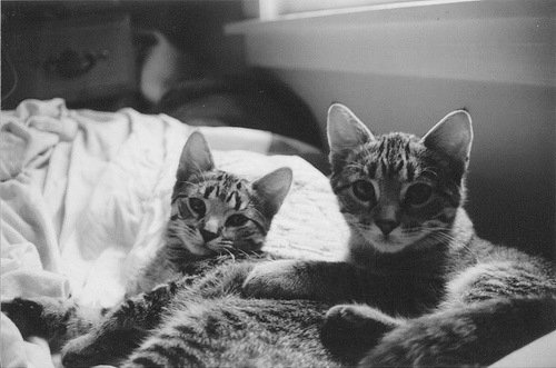 : Grey Kitty, Hey Kitty, Amazing Cat, Kitty Cat, Favorite Things, Cat Things, Crazy Cat, Cat Portraits, Cat Cat