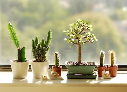 Tiny succulent garden in the window
