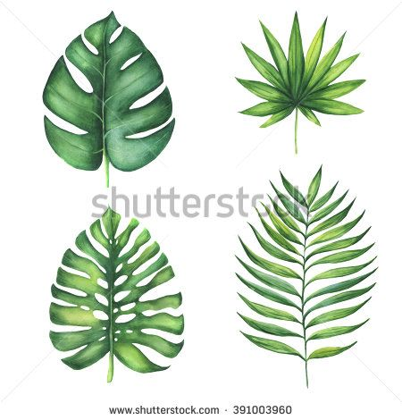 Set of green tropical palm leaves. Watercolor illustration of exotic plant. Isolated on white background. Beautiful set of design elements  - stock photo