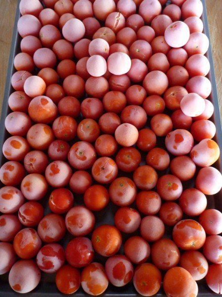 To freeze cherry tomatoes(from Gardenbetty) Wash and dry tomatoes thoroughly and put on a cookie sheet. Place cookie sheet in your freezer for a couple hours until the tomatoes are frozen solid. This eliminates the risk of frozen clumps. Put them in a gallon size freezer bag and freeze for up to 1 year.