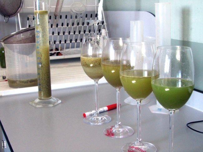 Conoce los vinos de Rueda - http://www.conmuchagula.com/2014/01/21/conoce-los-vinos-de-rueda/
