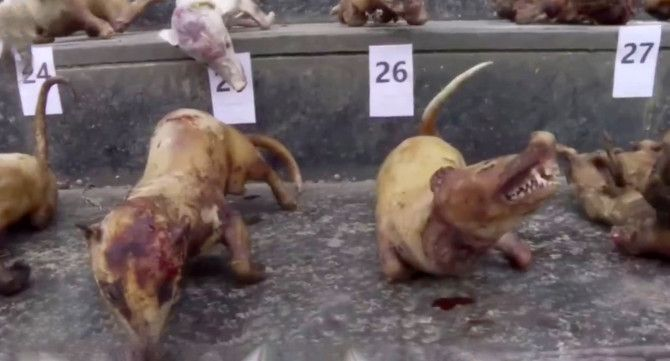 Pin On Dog Meat Trade
