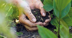 Ako zlepšiť štruktúru zeminy v záhrade