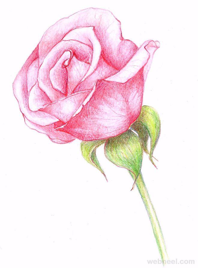 The 25 best Flower drawings ideas on Pinterest Pretty flower