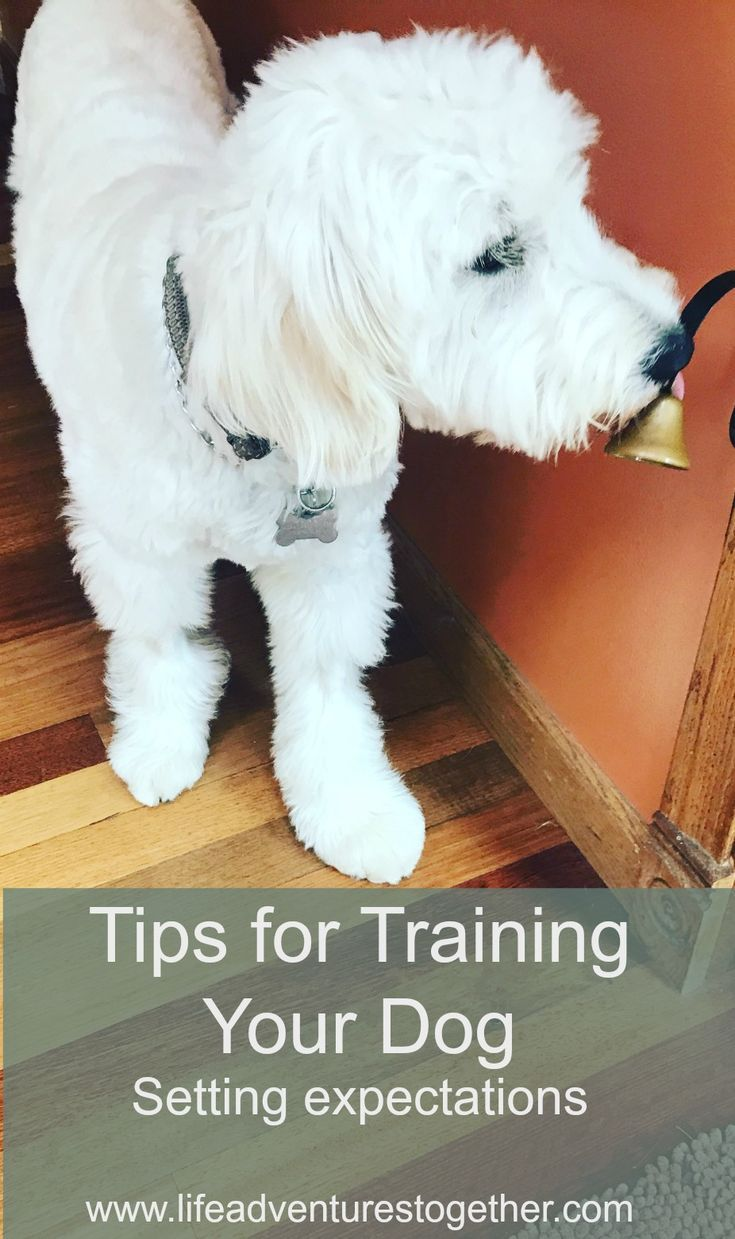 How We Trained Our Puppy Training Your Dog Puppy Training Schedule Puppy Training Tips