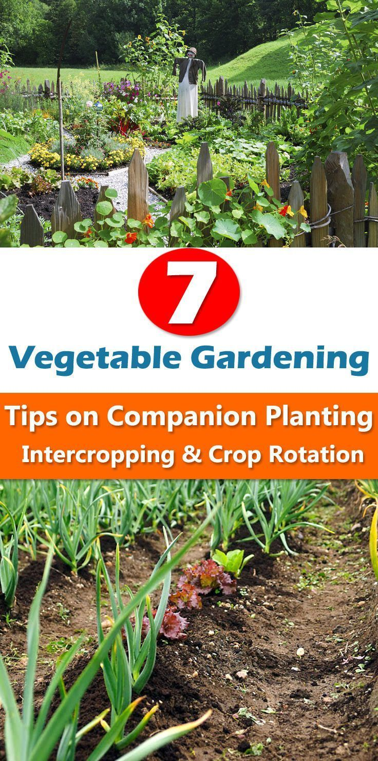 7 Essential Vegetable Gardening Tips To Improve Productivity With