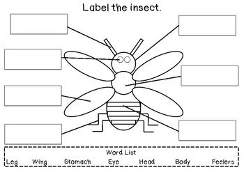 Label the insect - writing activity (free)