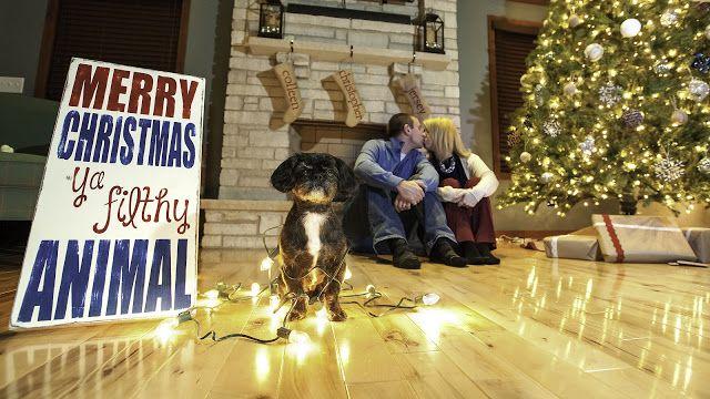 Funny Christmas Card Photo with dog - by Christopher F Photography - Merry Christmas Ya Filthy Animal!