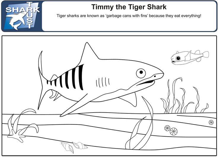 Mejores 320 imágenes de Sharks en Pinterest | Tiburones, Semana del ...