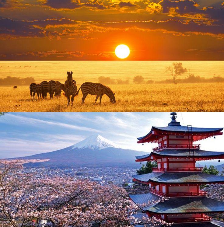 Africa to Japan | Honeymoon Donation