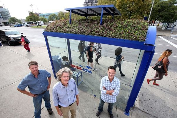 Green roof bus shelter. Combined talents of Lanfear, Connors and Jackson have turned NFTA's bus shelter in Buffalo, NY.