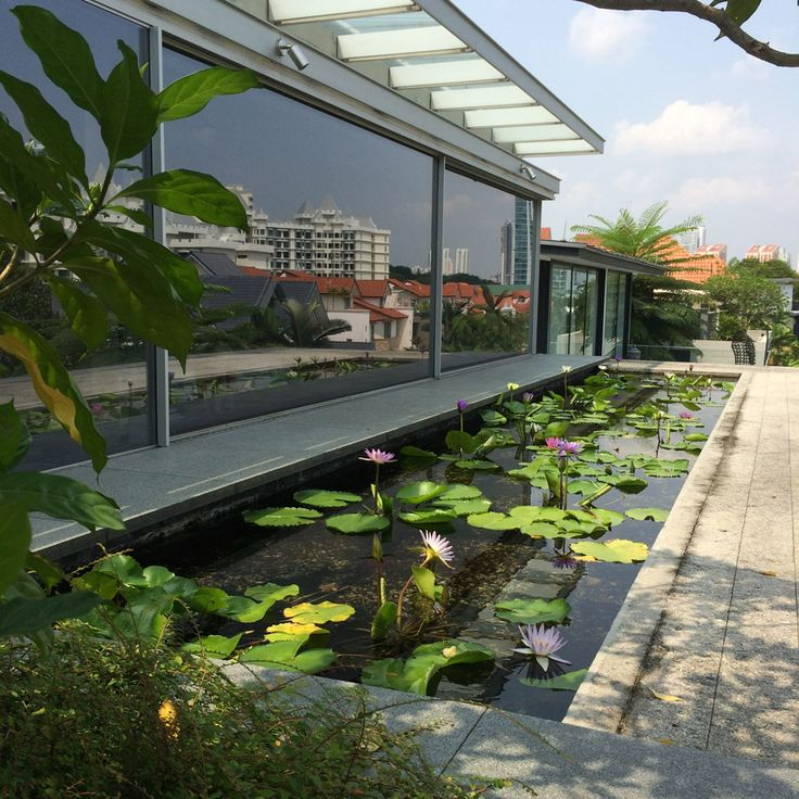 Chiltern House by WOW Architects features a rooftop lily pond to attract birds