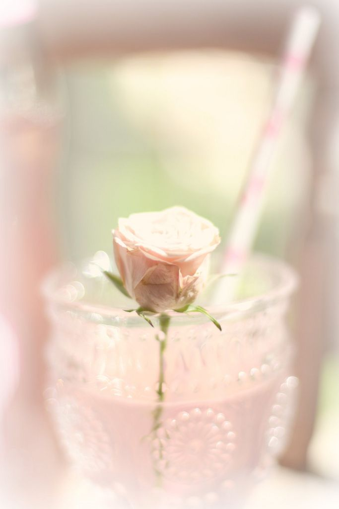 Rose in cup. So soft, and oh so yummy pink pretty!
