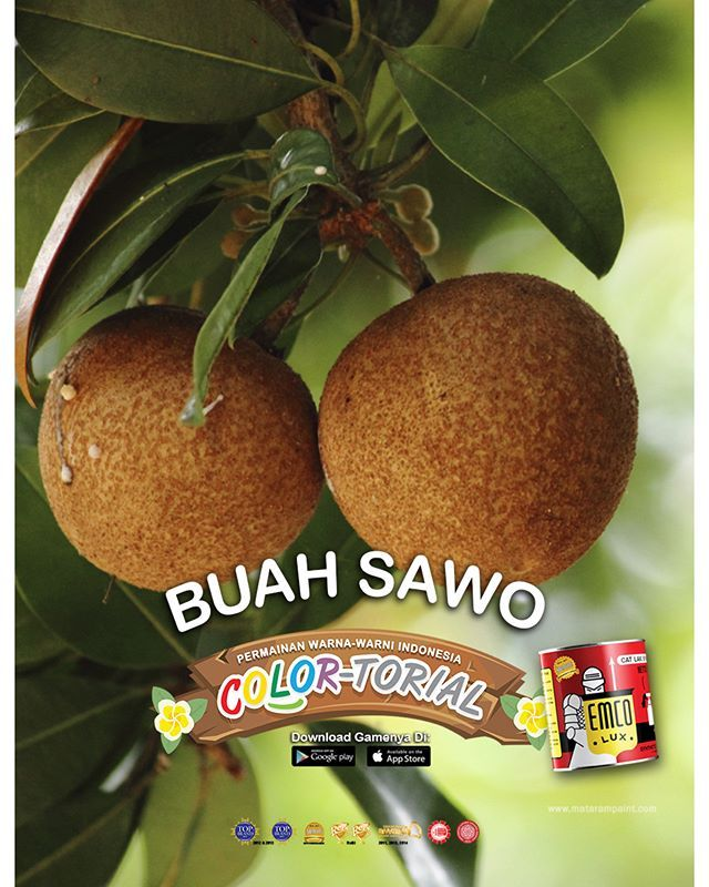 Buah Sawo  Buah sawo tidak hanya dikenal dalam dunia pantun, tapi juga dalam dunia sehari-hari. Buah asli Amerika Tengah dan Meksiko ini berasa manis dan kaya gula alami serta vitamin. Pohon sawo juga dekorasi pekarangan rumah di desa yang multi fungsi. Daun sawo bisa dipetik sebagai bahan parem, bubuk tradisional bagi para ibu yang baru saja melahirkan. Biji sawo juga bisa dipakai mainan, karena pipih dan berukuran besar. 😀  Sawo adalah satu dari tanaman yang tumbuh subur di Indonesia…