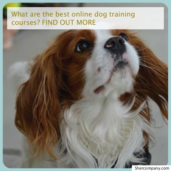 Dog House Training Tips Using The Crate In Dog Potty Training