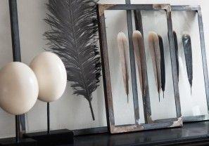 Struisvogeleieren en veren van een fazant voor in huis