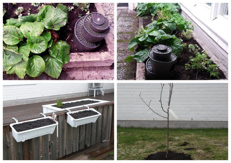 Kesäisen taikapuutarhan alkumetreillä, veden solinaa, kylvöjen seuraamista, saadaanko jo omenapuu kukkimaan?