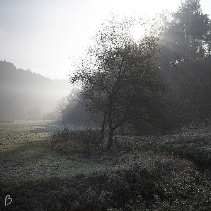 BestSideofLife - Morning fog