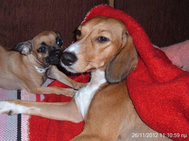 Διαγωνισμός taskylonea.com με δώρο αξεσουάρ για σκύλους - http://www.saveandwin.gr/diagonismoi-sw/diagonismos-taskylonea-com-me-doro-aksesouar-gia-skylous/