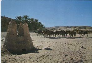Jefal Postcard, Algerie: Caravane de Chameaux, 4569
