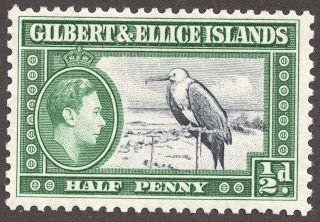 "Gilbert & Ellice Islands 1939 Scott 40 1/2p dark green & slate blue ""Great Frigate Bird"""