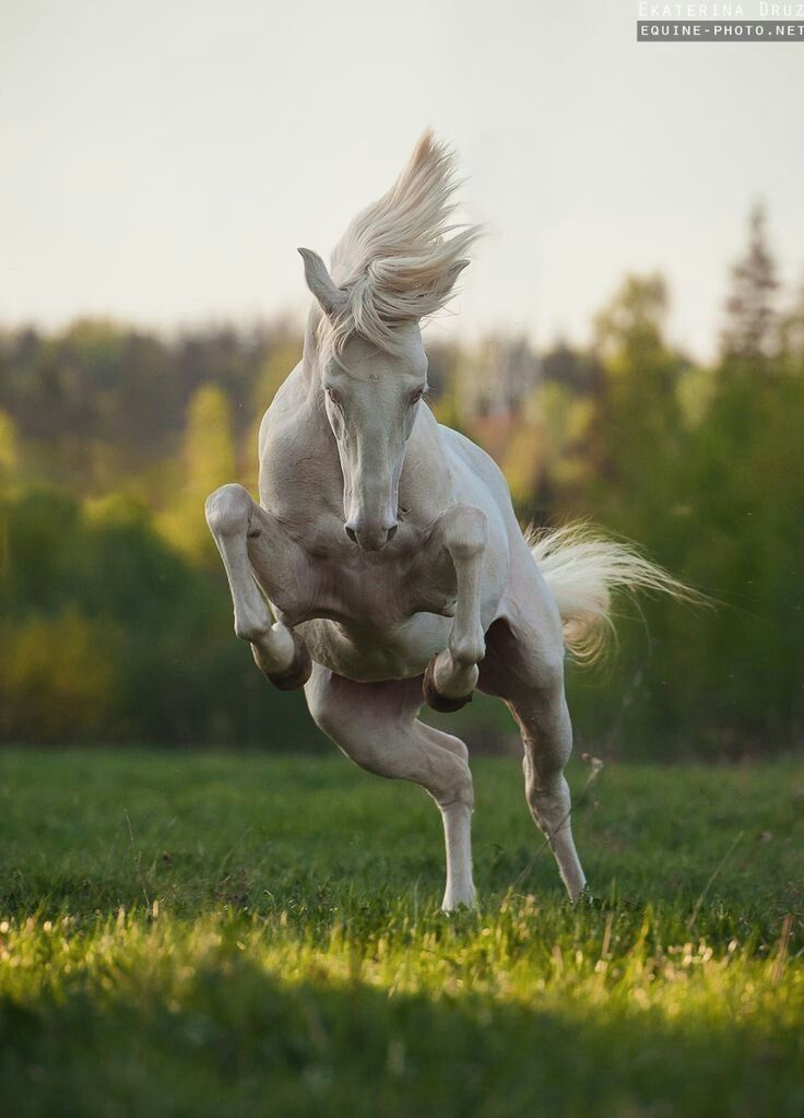 Doing the happy dance, just because one is alive!