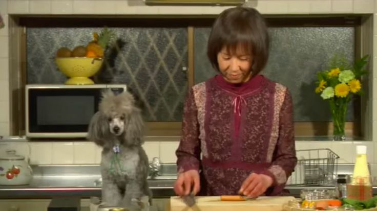 """For nearly a decade, the best thing on YouTube has been Cooking With Dog. Its conceit was strange and delightful. Chef (a middle-aged Japanese woman whose name is never revealed) cooked beautiful, intricate food, while her trusty dog sidekick Francis sat on the counter, """"narrating"""" the recipes in English."""