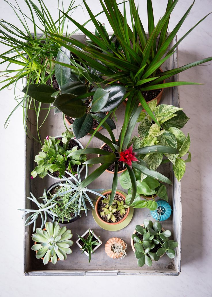 25 best ideas about houseplant on pinterest plants for Low maintenance winter plants