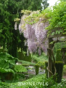 716 Best Images About Wisteria Lane On Pinterest Gardens