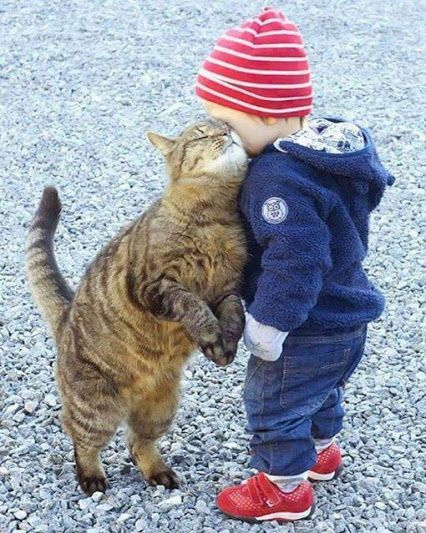These two are just too adorable! You can't look at this picture and not smile!  I love that this sweet cat is almost as tall as the little boy, perfect for snuggling up and giving the little boy a kitty greeting! ❤  PurritoCat