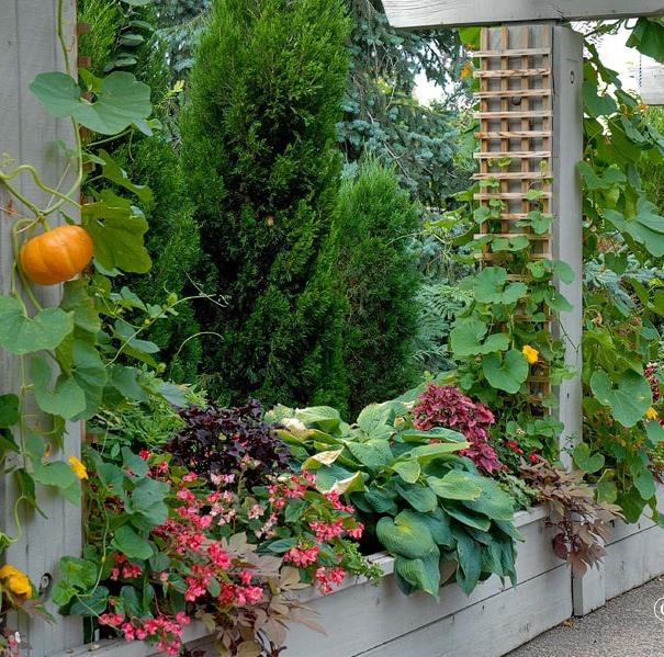 Rooftop Vegetable Garden Ideas: Top 43 Ideas About Garden ::: Edible Landscape On