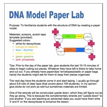 DNA Model- Paper Project | Biology classroom, Teaching ...