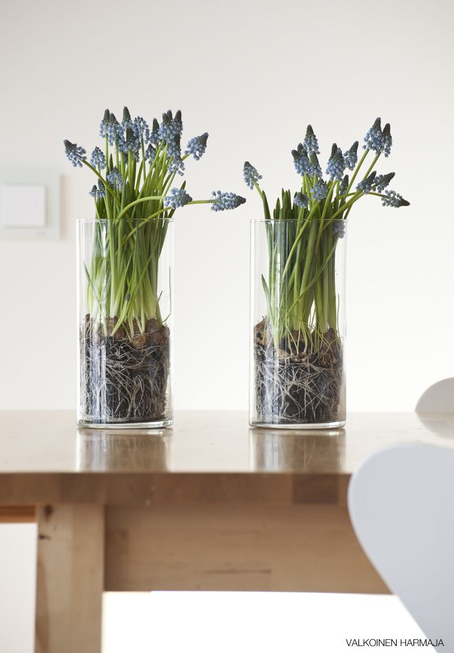 I like the idea of putting plants in glass containers