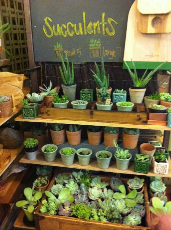 25 best ideas about succulent display on pinterest terrarium succulents and succulents garden - Elegant ways to display air plants in your home ...