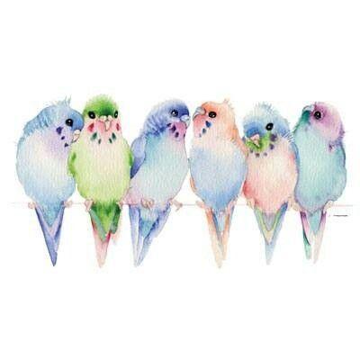 Watercolor birds pássaros imagens de pássaros tumblr