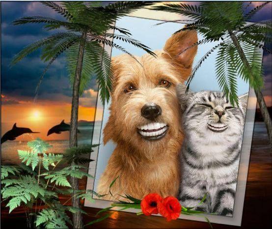 lachende hond en kat eens iets anders
