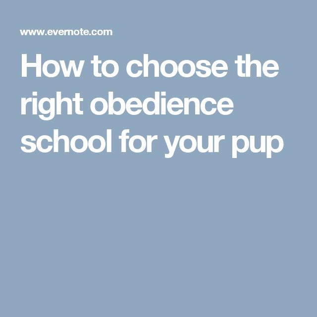 How to choose the right obedience school for your pup